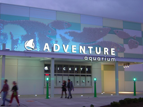 Aquarium Nj | Greetings From Scamden Nj Have You Heard